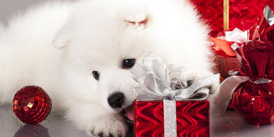 weihnachtsgeschenke f r hunde hund katz blog agila. Black Bedroom Furniture Sets. Home Design Ideas