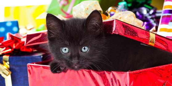 haustiere als weihnachtsgeschenk keine gute idee hund. Black Bedroom Furniture Sets. Home Design Ideas