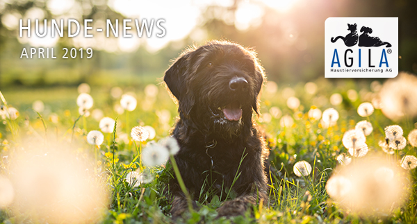 AGILA Hunde-News April 2019