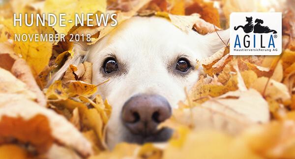 AGILA Hunde-News November 2018