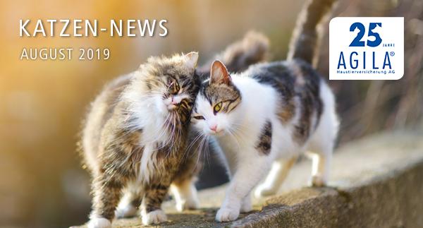 Katzen-News August 2019