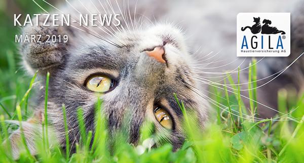 Katzen-News März 2019