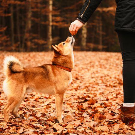 Hundetrainer-Sprechstunde