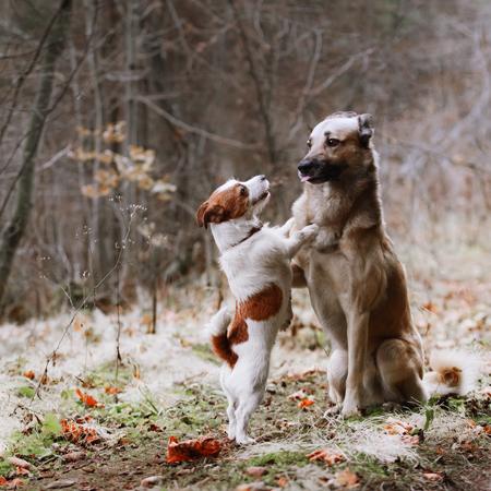 AGILA Tierkrankenschutz