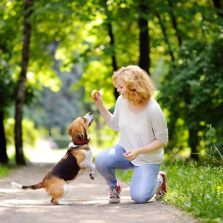 Hundeschule vs. Privattraining