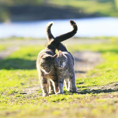 Pubertät bei Katzen