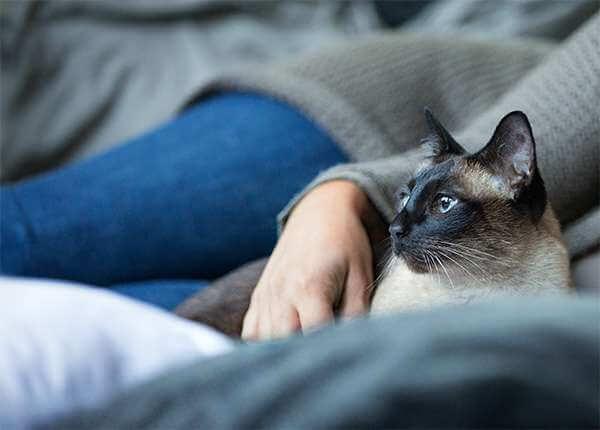 tierversicherung hund katze g nstig absichern agila. Black Bedroom Furniture Sets. Home Design Ideas