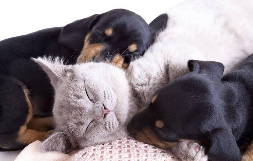 Fotowettbewerb Valentinstag Mit Hund Katze Agila