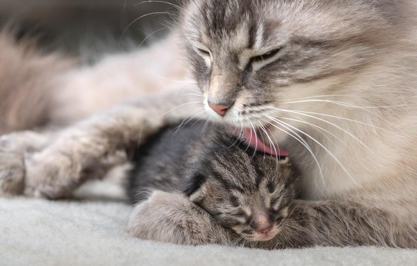 Katzen man woran erkennt eine schwangerschaft bei Wie erkenne