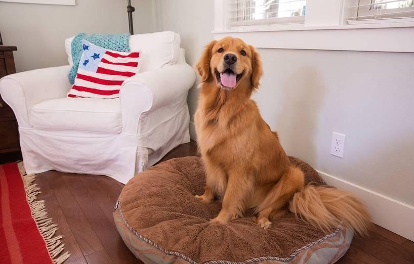 bodenbelag wohnzimmer hund, geeigneter bodenbelag bei hundehaltung - agila, Design ideen
