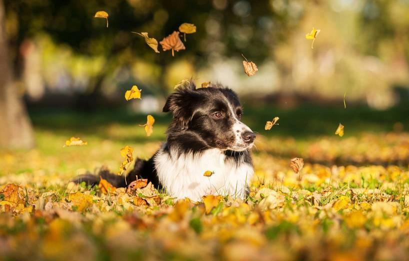 Gesund Und Munter Mit Hund Durch Den Herbst Agila