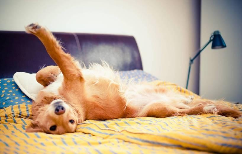 Hund Mit Ins Bett Agila