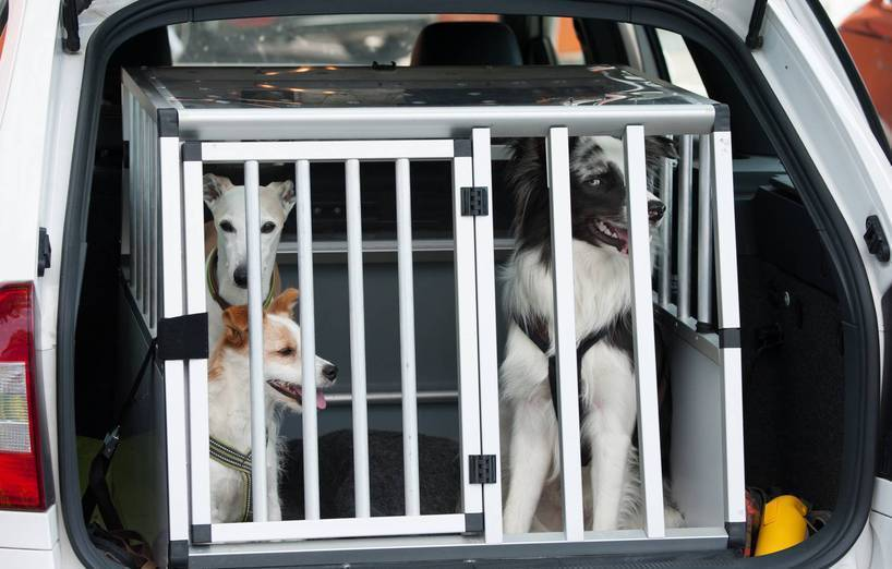Hundebox - sicherer Transport