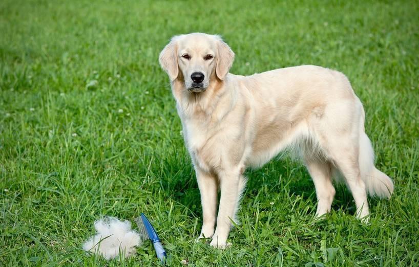 Hundehaare von der kleidung entfernen agila