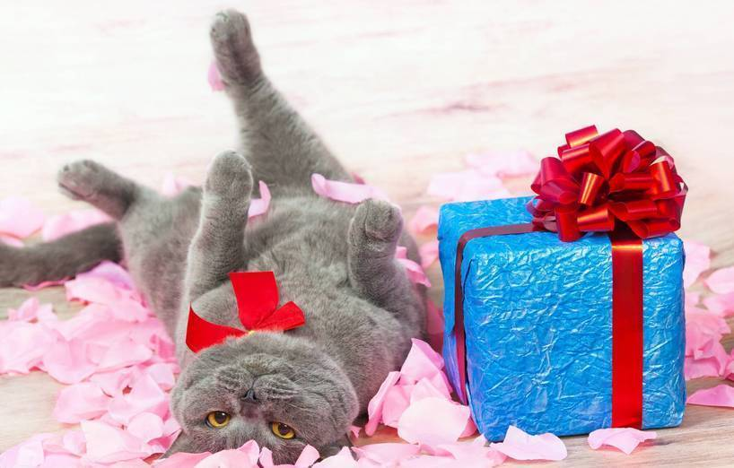 freut sich ihre katze ber geschenke agila. Black Bedroom Furniture Sets. Home Design Ideas