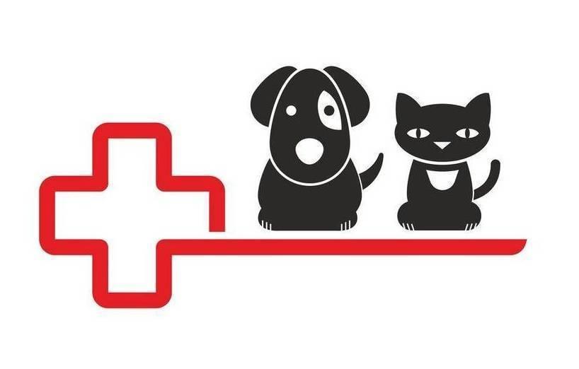 autoimmunerkrankung polyarthritis hund behandlung