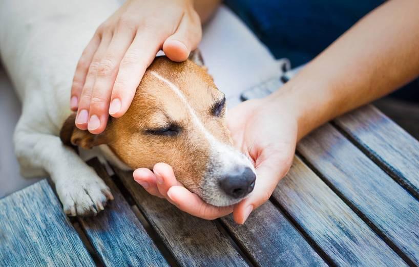 wie werden hunde eingeschläfert