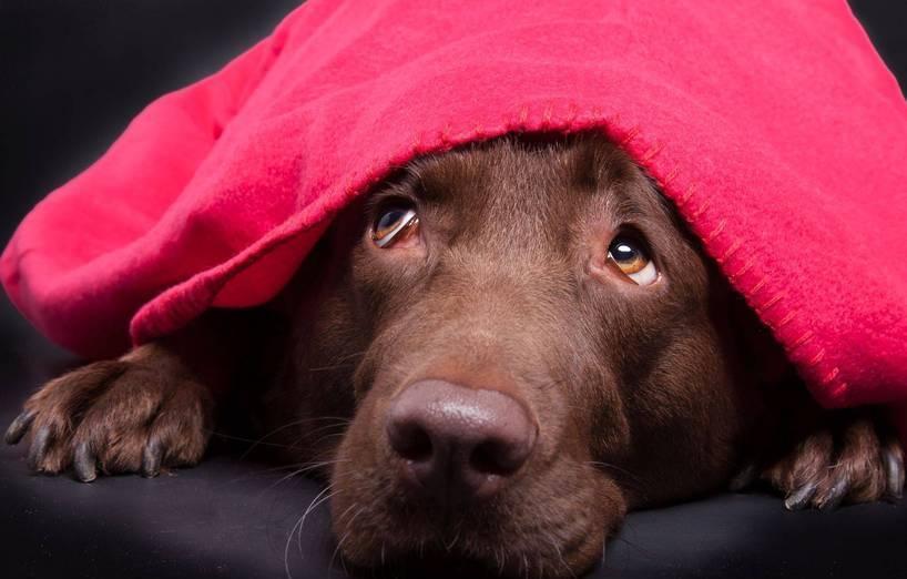 Scheuen Hunden Die Angst Nehmen Agila
