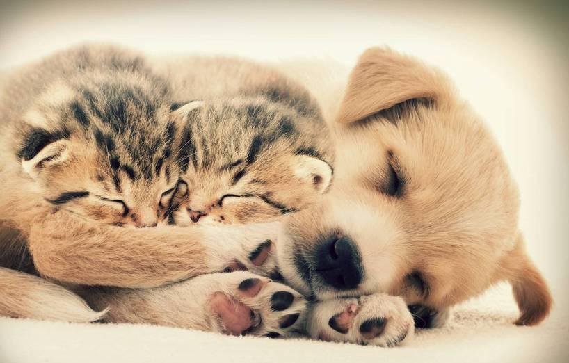 schlafplatz der katze agila