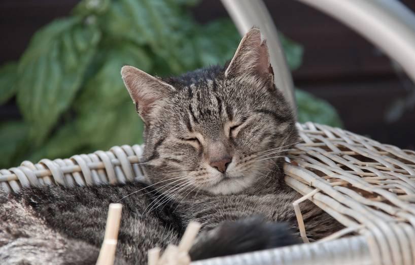 Tipps Fur Einen Katzenfreundlichen Balkon Agila