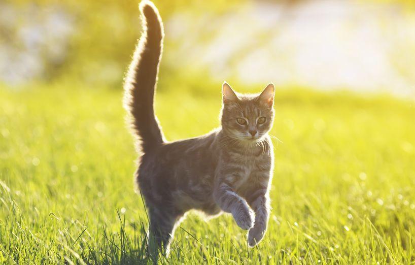 Was sagt mir die Schwanzstellung meiner Katze? - AGILA