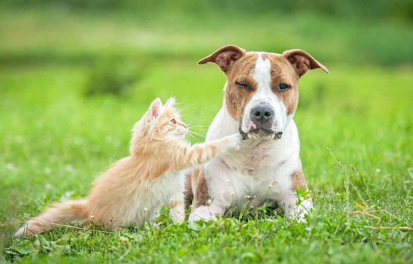 Zusammenleben Von Hund Und Katze Agila