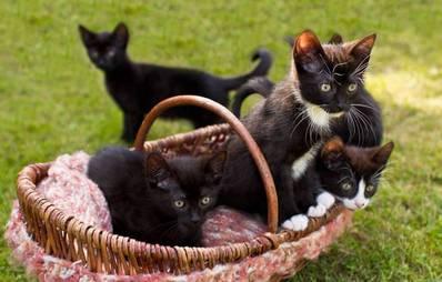 tierlexikon zu hunden katzen agila. Black Bedroom Furniture Sets. Home Design Ideas